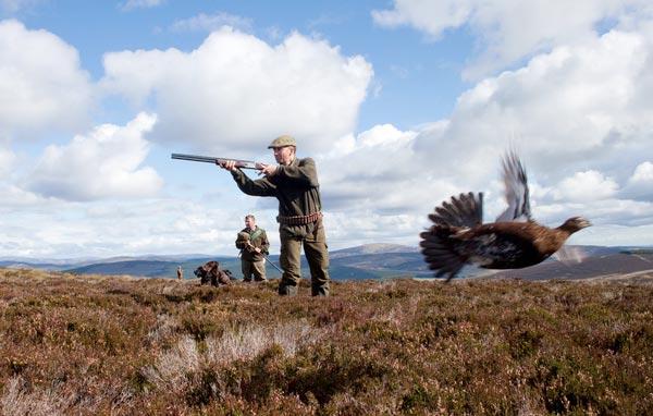 Bird Shoots at Brewlands Estate